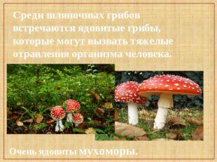 Среди шляпочных грибов встречаются ядовитые грибы, которые могут вызвать тяже