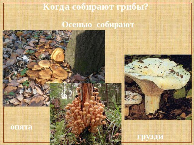 Когда собирают грибы? Осенью собирают опята грузди