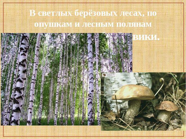 В светлых берёзовых лесах, по опушкам и лесным полянам встречаются подберёзов...