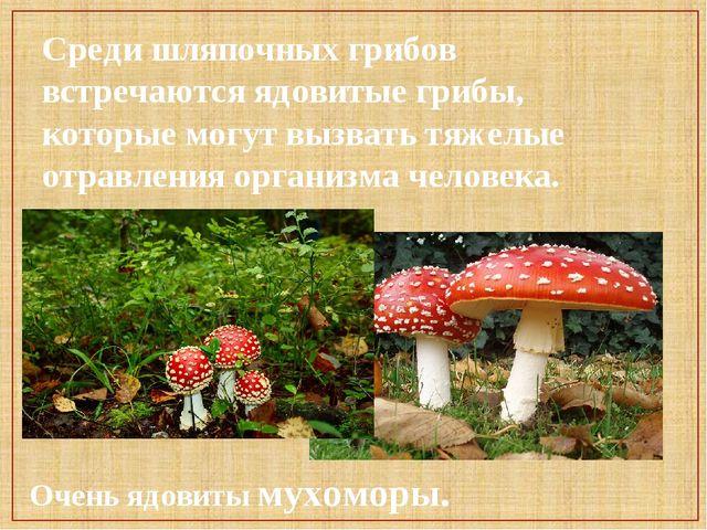 Среди шляпочных грибов встречаются ядовитые грибы, которые могут вызвать тяже...
