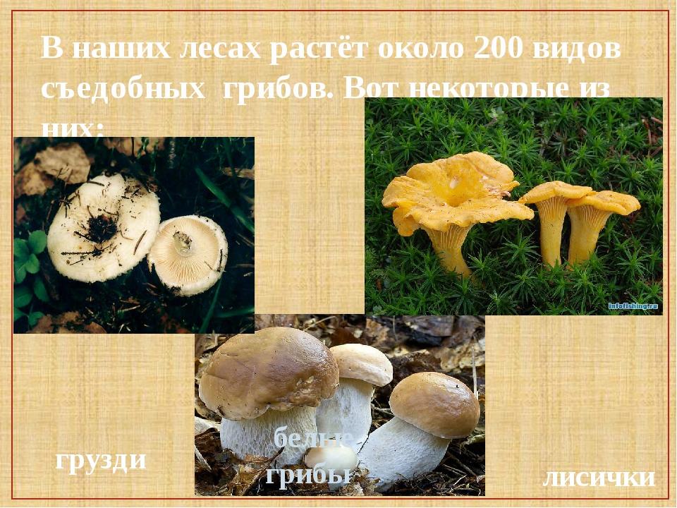 В наших лесах растёт около 200 видов съедобных грибов. Вот некоторые из них:...