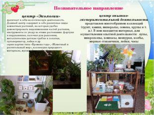 Познавательное направление центр «Экологии» включает в себя экологическую де