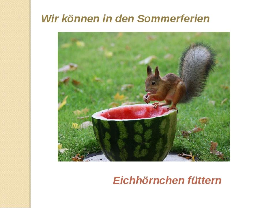 Wir können in den Sommerferien Eichhörnchen füttern