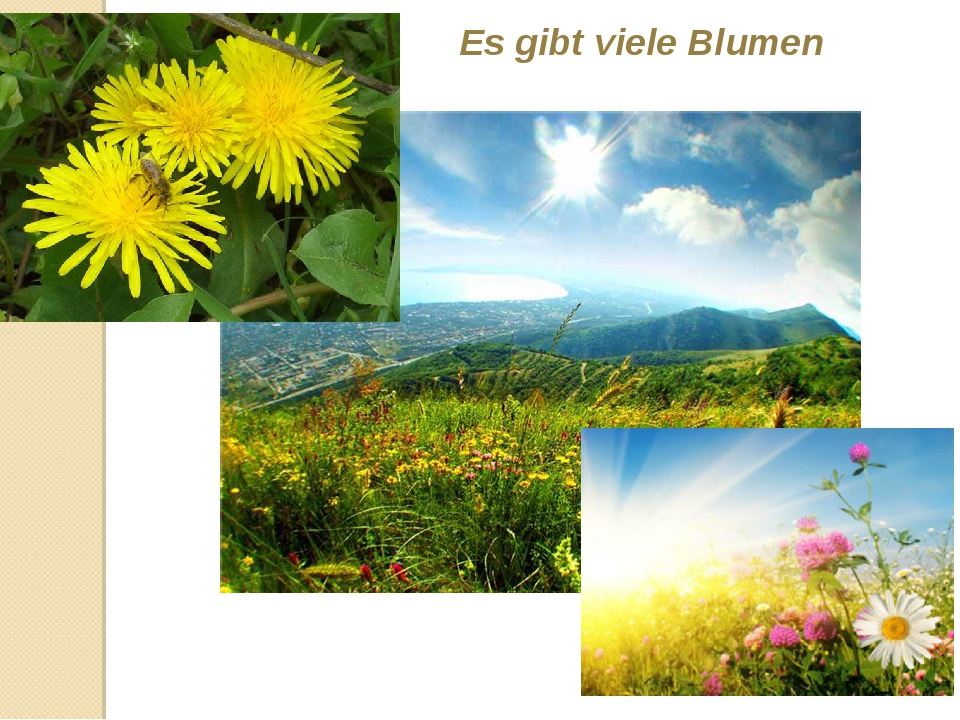 Es gibt viele Blumen