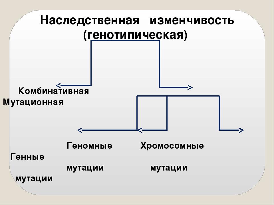 Наследственная изменчивость (генотипическая) Комбинативная Мутационная Геномн...