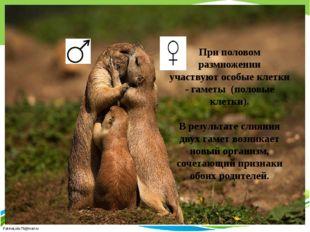 При половом размножении участвуют особые клетки - гаметы (половые клетки). В