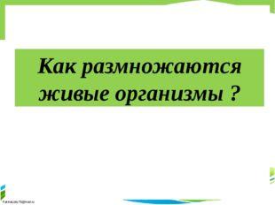 Как размножаются живые организмы ? FokinaLida.75@mail.ru