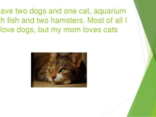 I have two dogs and one cat, aquarium with fish and two hamsters. Most of all