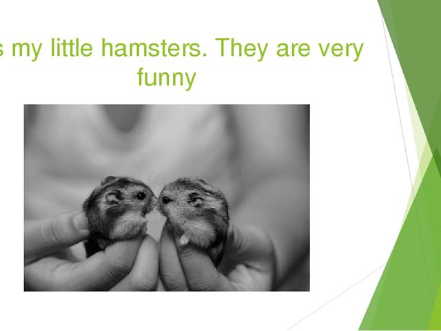 It`s my little hamsters. They are very funny
