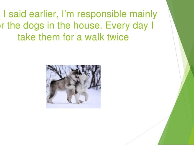 As I said earlier, I'm responsible mainly for the dogs in the house. Every da...