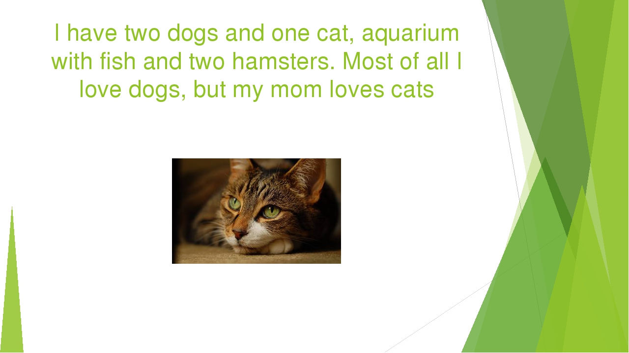 I have two dogs and one cat, aquarium with fish and two hamsters. Most of all...