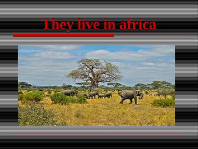They live in africa
