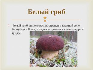 Белый гриб широко распространен в таежной зоне Республики Коми, изредка встр