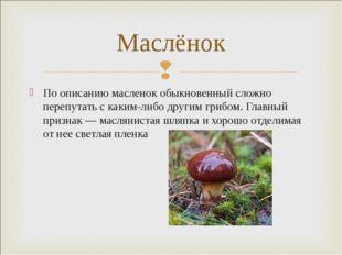 По описанию масленок обыкновенный сложно перепутать с каким-либо другим грибо