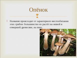 Название происходит от характерного местообитания этих грибов: большинство их