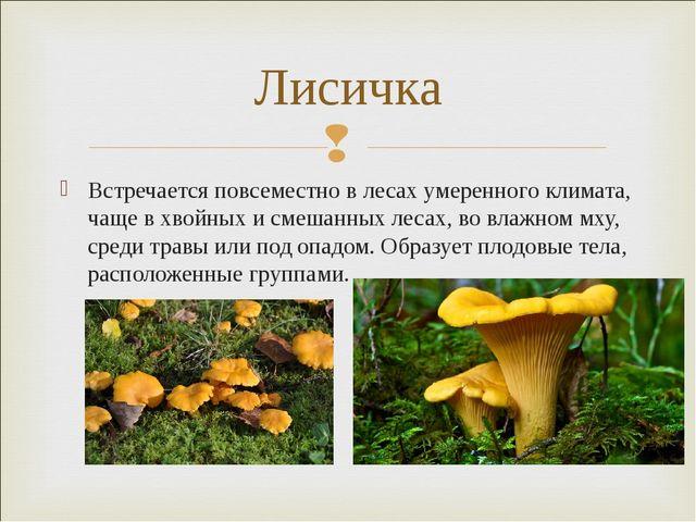 Встречается повсеместно в лесах умеренного климата, чаще вхвойныхисмешанны...