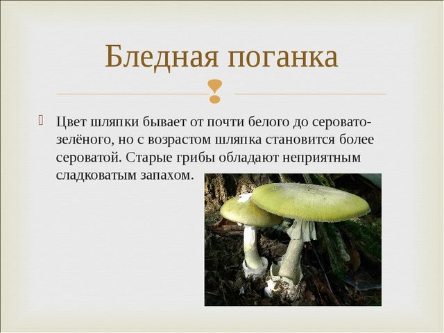Цвет шляпки бывает от почти белого до серовато-зелёного, но с возрастом шляпк...