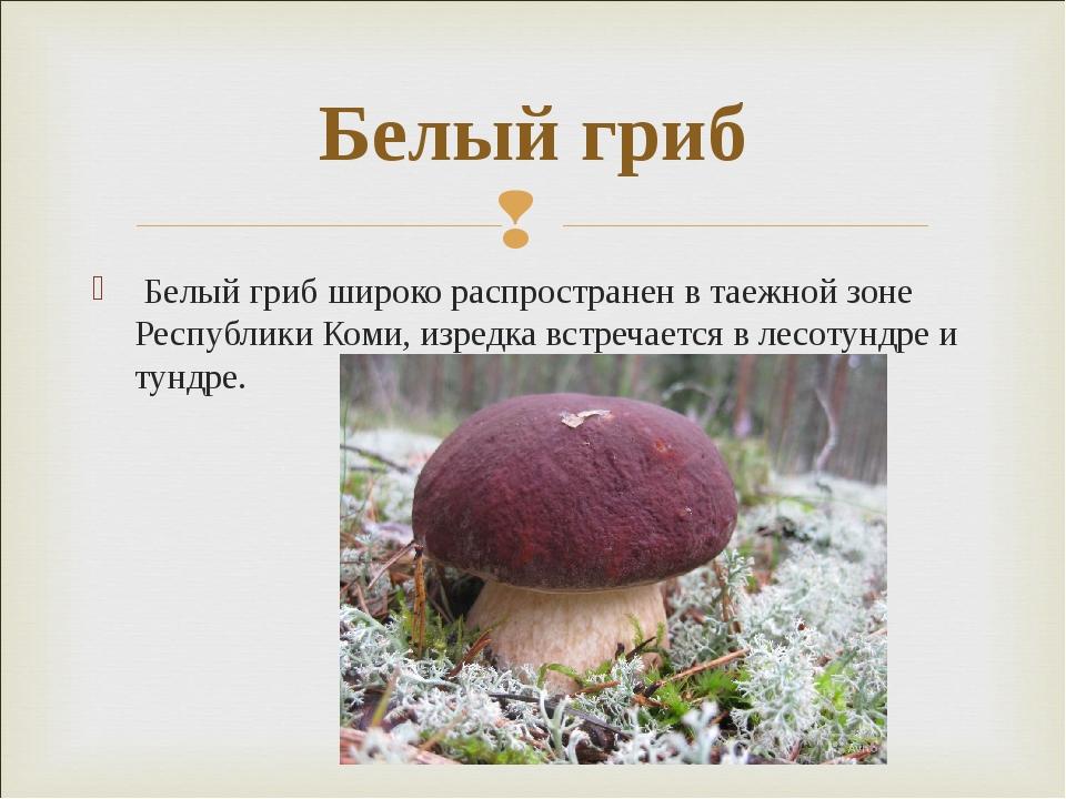 Белый гриб широко распространен в таежной зоне Республики Коми, изредка встр...