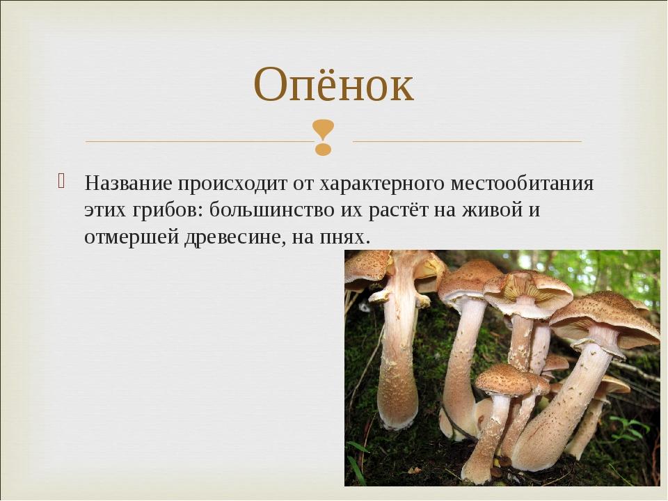 Название происходит от характерного местообитания этих грибов: большинство их...