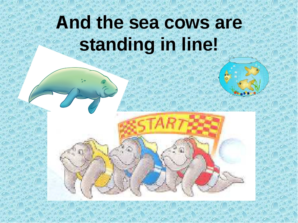 And the sea cows are standing in line!