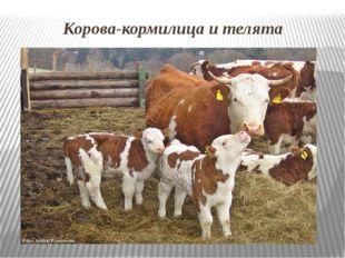 Корова-кормилица и телята