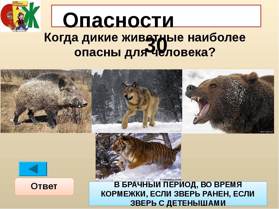 Опасности 30 Когда дикие животные наиболее опасны для человека? Ответ В БРАЧН...