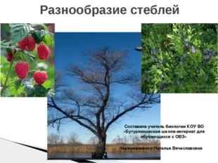 Разнообразие стеблей Составила учитель биологии КОУ ВО «Бутурлиновская школа-