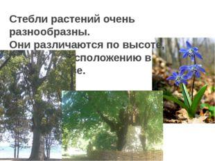 Стебли растений очень разнообразны. Они различаются по высоте, толщине, распо