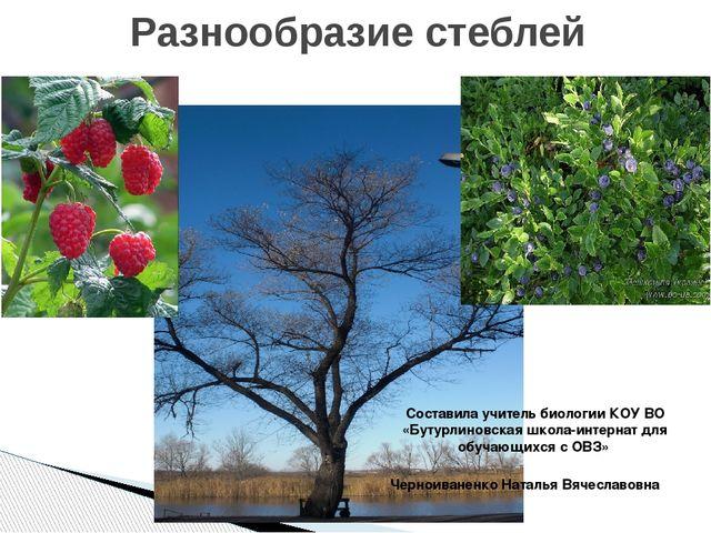 Разнообразие стеблей Составила учитель биологии КОУ ВО «Бутурлиновская школа-...