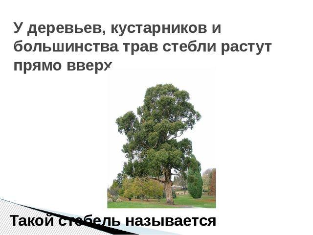 У деревьев, кустарников и большинства трав стебли растут прямо вверх. Такой с...