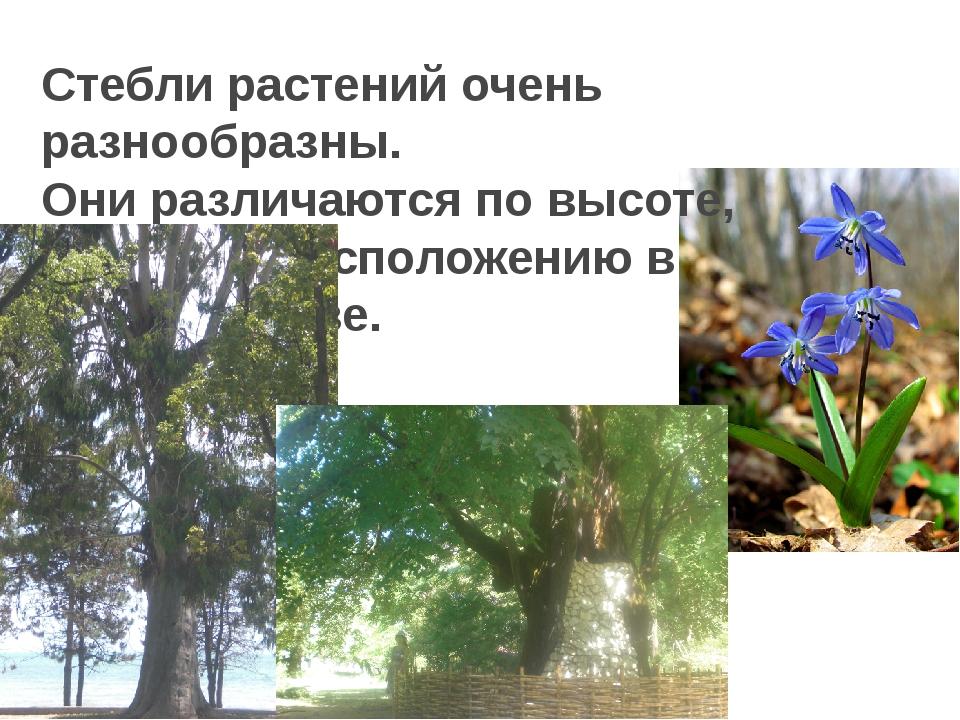 Стебли растений очень разнообразны. Они различаются по высоте, толщине, распо...