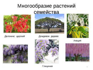 Многообразие растений семейства * Делоникс царский Дождевое дерево Акация Гли
