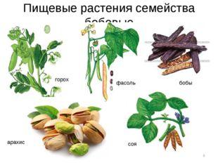 Пищевые растения семейства бобовые * горох фасоль бобы арахис соя