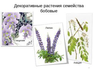 Декоративные растения семейства бобовые * Люпин Глициния Акация
