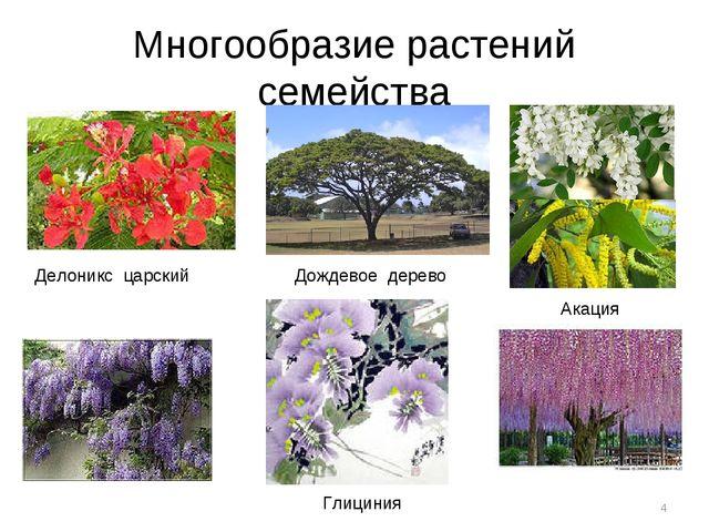 Многообразие растений семейства * Делоникс царский Дождевое дерево Акация Гли...