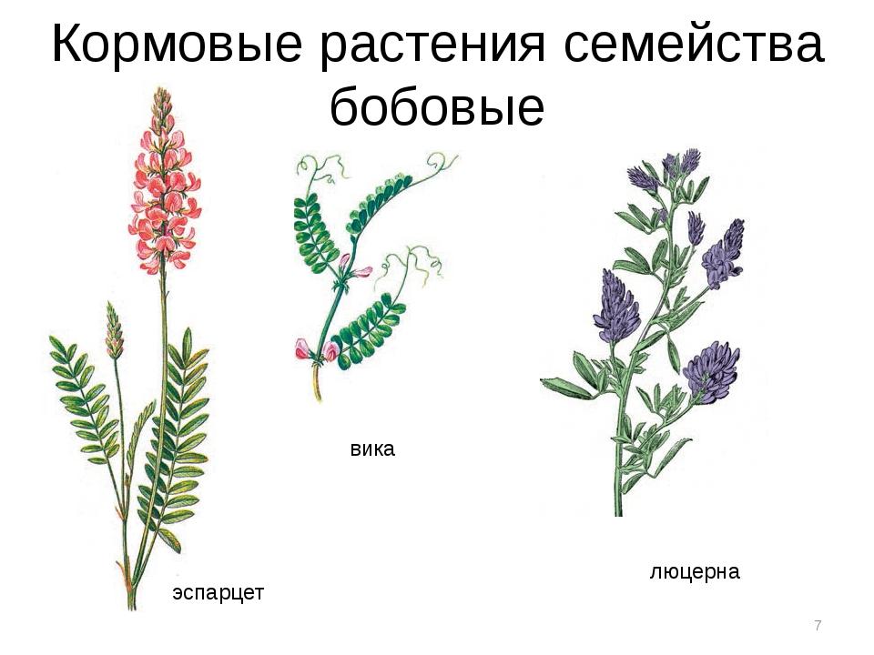 Кормовые растения семейства бобовые * люцерна вика эспарцет
