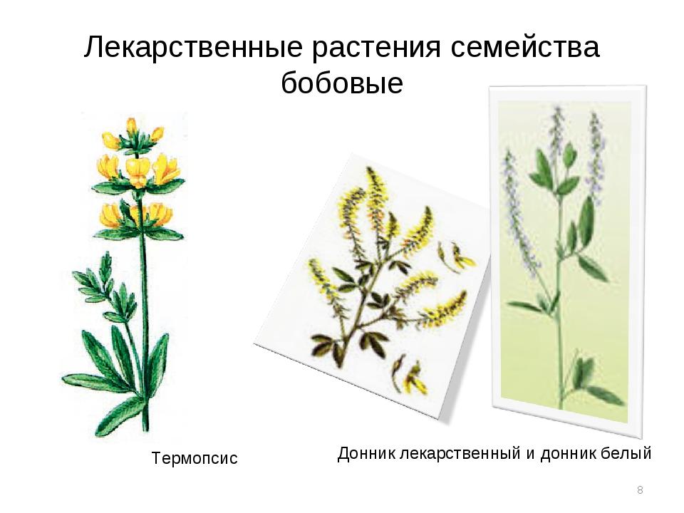 Лекарственные растения семейства бобовые * Термопсис Донник лекарственный и д...