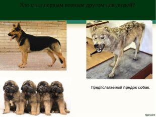 Кто стал первым верным другом для людей? Предполагаемый предок собак.