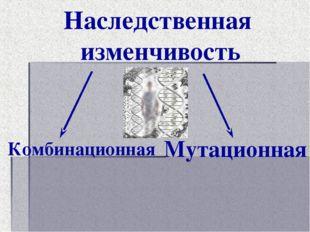 Наследственная изменчивость Комбинационная Мутационная