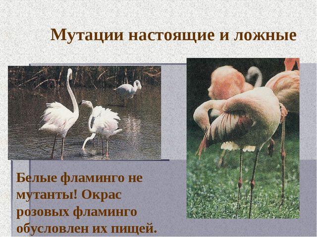 Мутации настоящие и ложные Белые фламинго не мутанты! Окрас розовых фламинго...