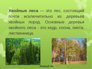 Хвойные леса — это лес, состоящий почти исключительно из деревьев хвойных пор