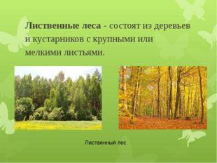 Лиственные леса - состоят из деревьев и кустарников с крупными или мелкими ли