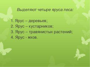 Выделяют четыре яруса леса: 1. Ярус – деревьев; 2. Ярус – кустарников; 3. Яру