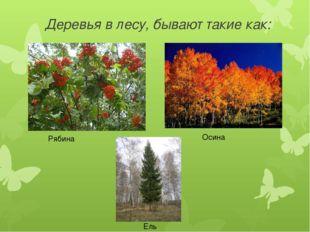 Деревья в лесу, бывают такие как: Рябина Осина Ель
