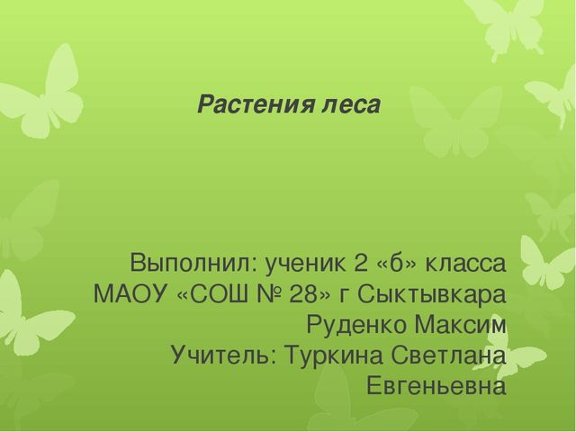 Растения леса Выполнил: ученик 2 «б» класса МАОУ «СОШ № 28» г Сыктывкара Руде...