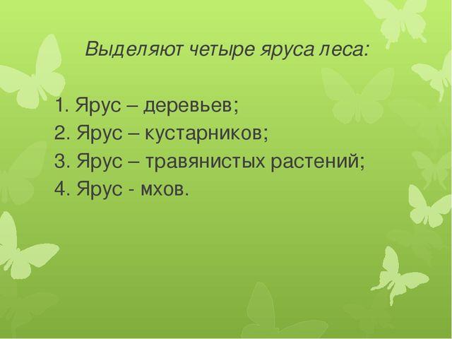 Выделяют четыре яруса леса: 1. Ярус – деревьев; 2. Ярус – кустарников; 3. Яру...
