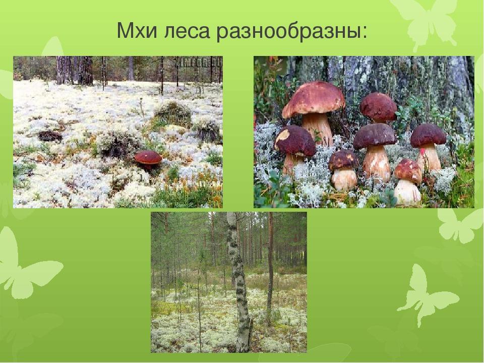 Мхи леса разнообразны: