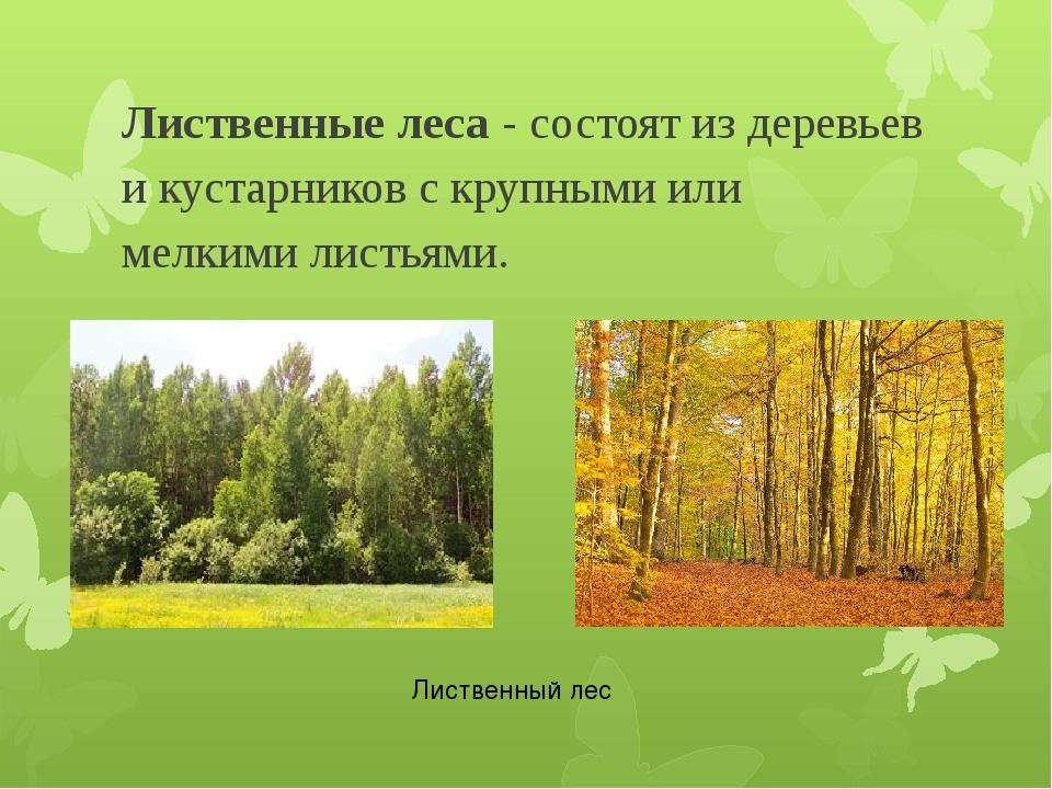 Лиственные леса - состоят из деревьев и кустарников с крупными или мелкими ли...