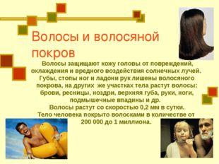 Волосы и волосяной покров Волосы защищают кожу головы от повреждений, охлажде