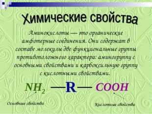 Аминокислоты — это органические амфотерные соединения. Они содержат в составе